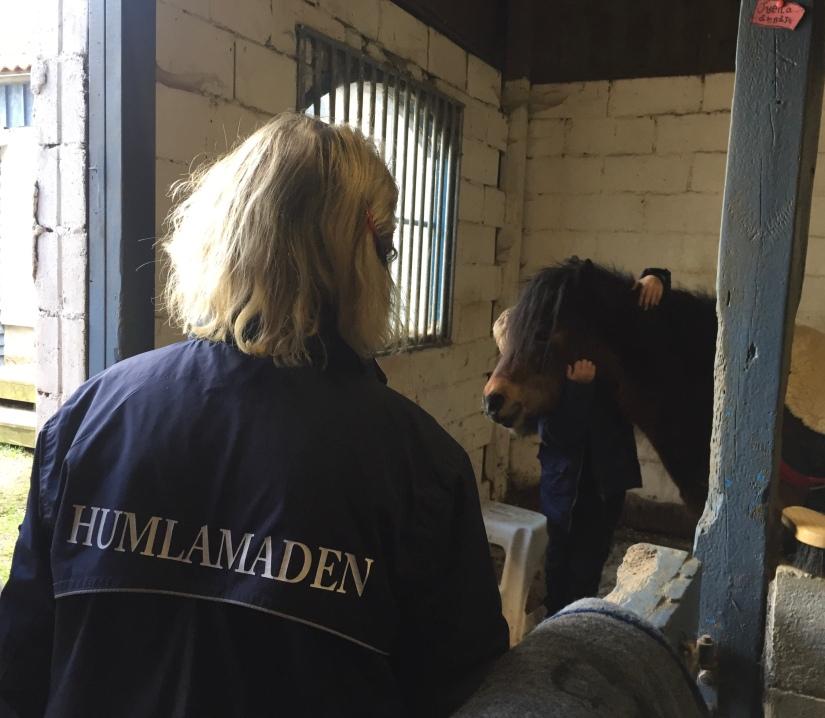 En pedagog från Humlamaden hjälper en elev att ta hand om en häst efter dagens arbete